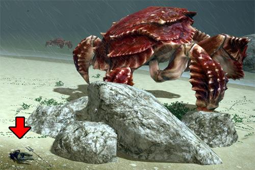 巨大蟹の横で転がる
