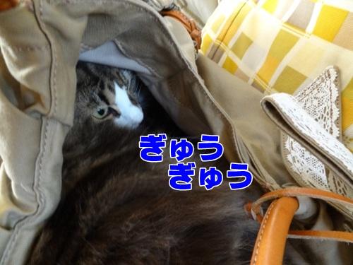 autumnbag5_text.jpg