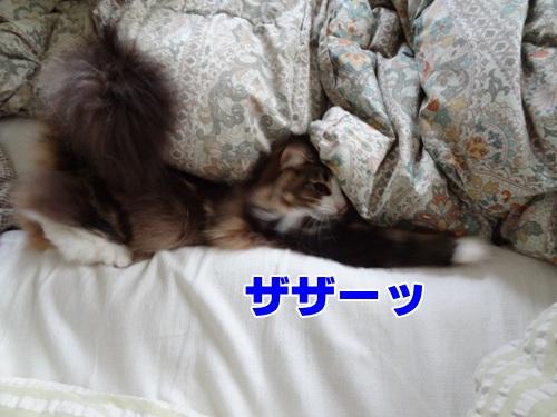 futon3_text.jpg