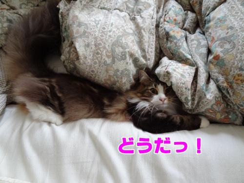 futon4_text.jpg