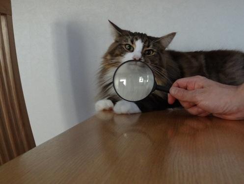 magnifier2.jpg