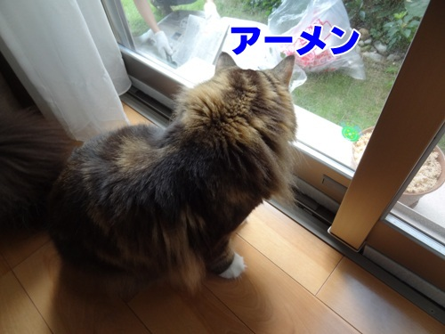 mystery1_text.jpg