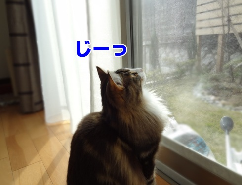 observation4_text.jpg