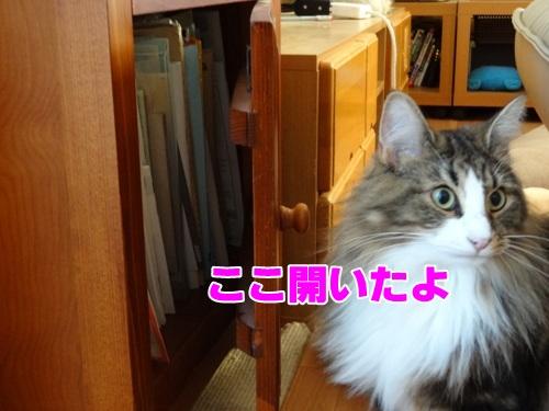open5_text.jpg