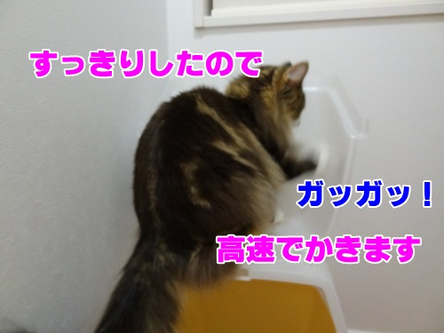 royalcanin6_text.jpg