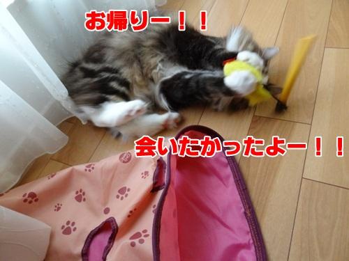 sakana_again3_text.jpg