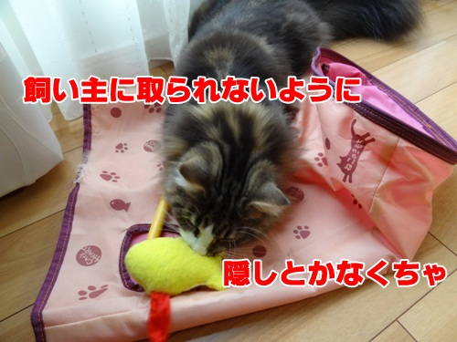 sakana_again5_text.jpg