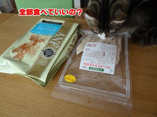 sasami2_text.jpg