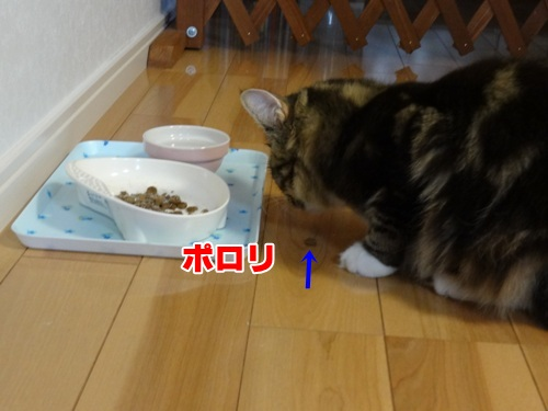 sasami6_text.jpg