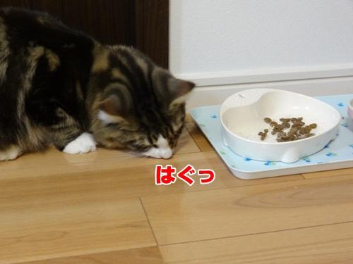 sasami7_text.jpg