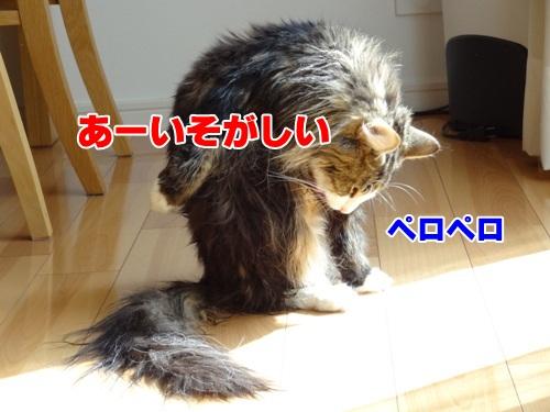 shampoo5_text.jpg