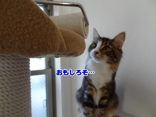 souji1_4text.jpg