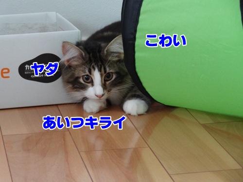 souji2_4text.jpg