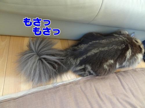 tail3_text.jpg
