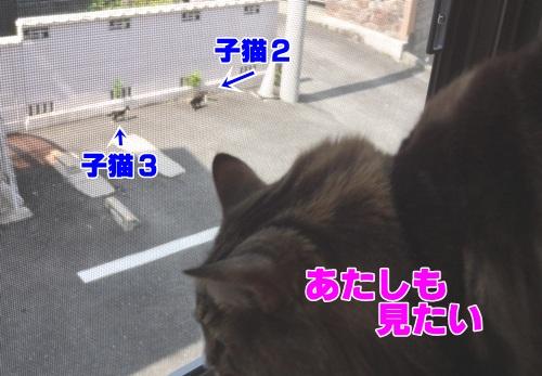 wildcats4_text.jpg