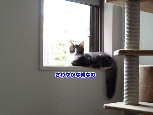 window2text.jpg