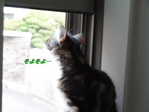 window3text.jpg