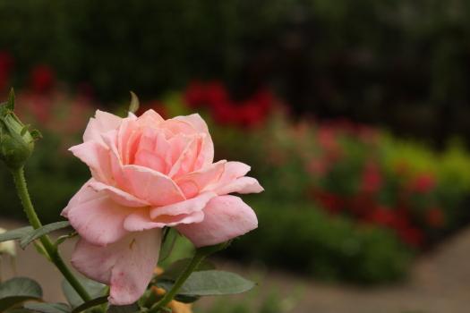 120722-flower-01.jpg