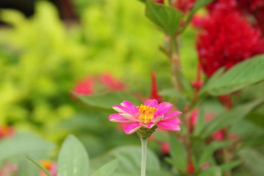 120722-flower-02.jpg