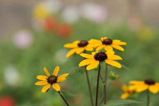 120722-flower-03.jpg