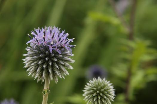 120722-flower-06.jpg