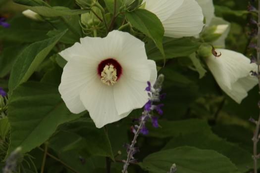 120722-flower-08.jpg