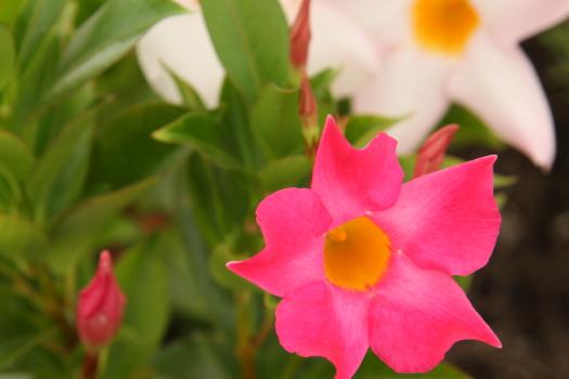 120722-flower-14.jpg