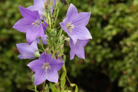 120722-flower-19.jpg