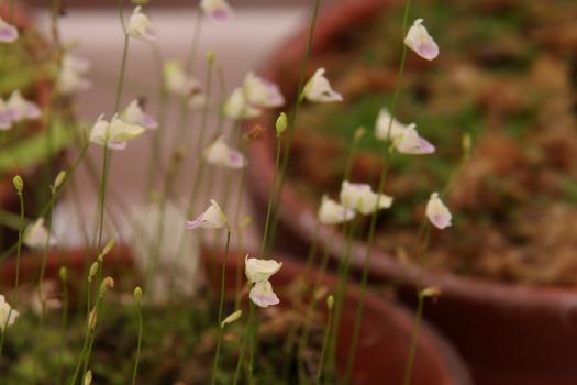 120722-flower-20.jpg