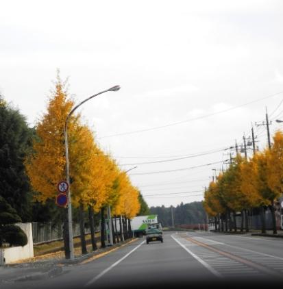20141117 新しいワンコの迎えに栃木へ (1)