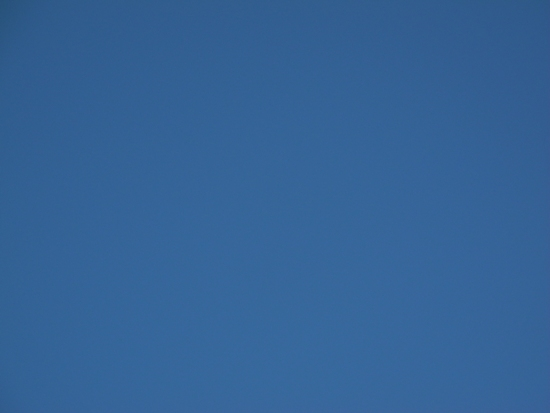 ブルーが逝った 20141203 (2)