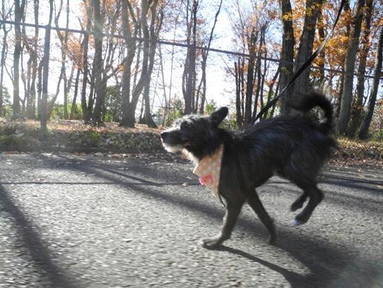 ココロ、初の森散歩 20141223 (50)