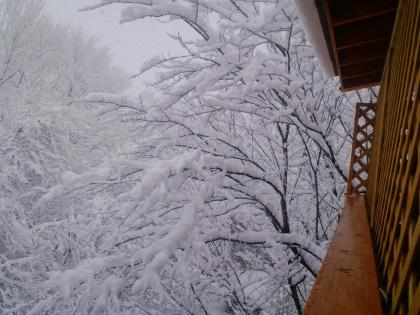美しい大雪 (18)