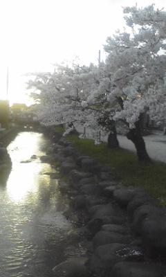 4/29 桜道