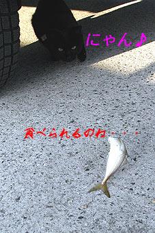 R1014392005.jpg