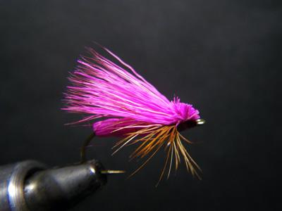 ピンクカディス
