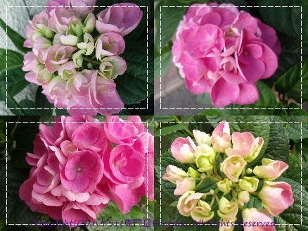 DSCF5159-tile1.jpg