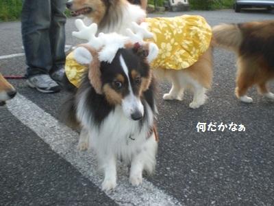 2010.7.4 よつばちゃんも笑顔だったりする