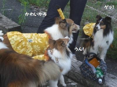 2010.7.4 よつばちゃんギョ!