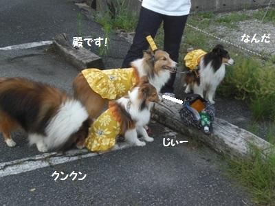 2010.7.4 風紀委員活動 タイゲットみっけ