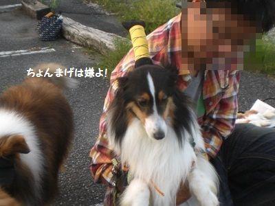 2010.7.4 よつばちゃん頑張れ