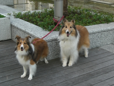2010.8.1 楽しい散歩