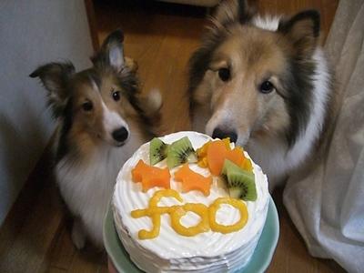2010  10 5 foo手作りケーキ
