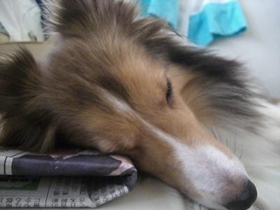 2010 10 16 新聞枕でお休み中