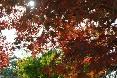 白川郷の秋