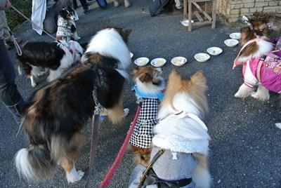 2011.12.23 ワンズケーキ Joshくん移動したら小さくなるよ