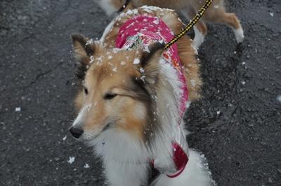 2012.1.4 12歳にして初雪
