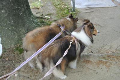 2012.5.19 夕方の散歩