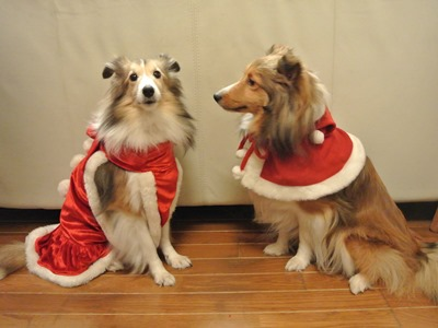 メリークリスマス 今日は何の日