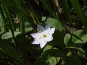201108燕岳_蝶ヶ岳のお花21